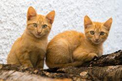 תמונה שתציג תפריט של חתולים