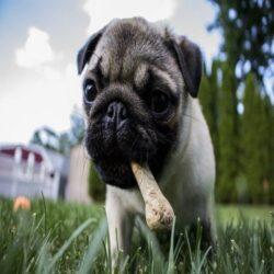 חטיפים ועצמות לכלב