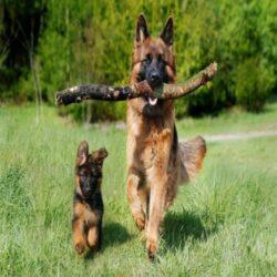 צעצועים ומשחקים לכלב